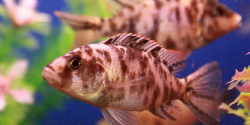 Kostenloser Vortrag im Fischereimuseum