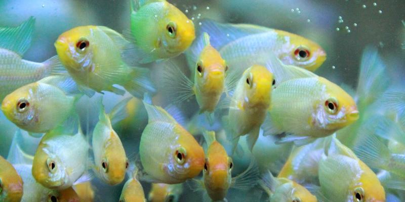 Börse für Aquaristik und Terraristik